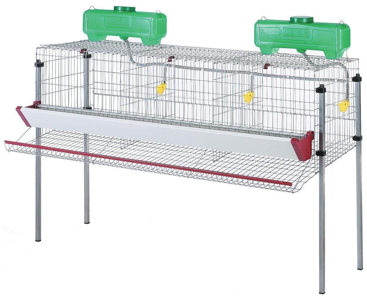 jaulas para gallinas ponedora