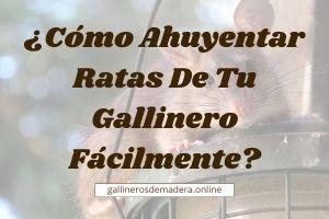 🥇【 ¿Cómo AHUYENTAR RATAS de los Gallineros? 】Guía Fácil