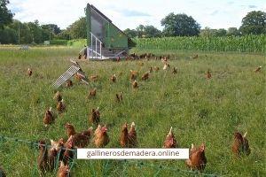normativa gallinas ecologicas