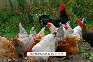 granja avicola ecologica
