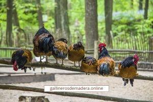 eliminar acaros gallinero