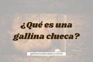 ▷ ¿Qué es una Gallina Clueca?【Consecuencias / Soluciones】