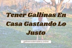 ▷【 Tener GALLINAS en CASA 】Guía Fácil ▷ ¿Es Legal?