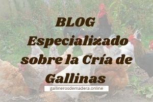 🥇 La Cría de Gallinas en 2021 【BLOG de GALLINAS】