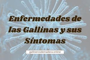 🥇 Enfermedades de las Gallinas ▷【GUIA FÁCIL 2021】