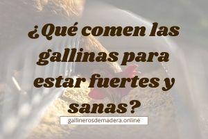 ▷ ¿Qué Comen Las Gallinas? 【BUENOS y PROHIBIDOS】