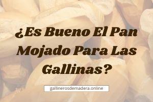 ▷ ¿Pan Mojado Para Las Gallinas? 【SI / NO / CUANTO】