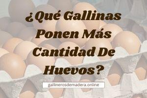 ▷ ¿Qué Gallinas ponen más Huevos? 【GUÍA 2021】
